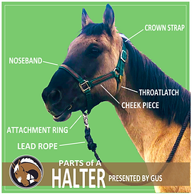 Parts of the Halter.png