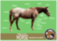 SH Parts of the Horse.png
