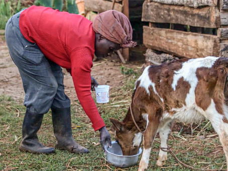 Financial Literacy Changing Minds to Increase Dairy Production
