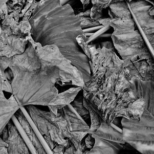 decay, Elements Series, Latifah Iddriss, 2017