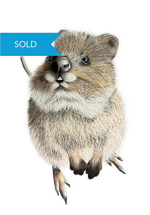 SOLD - Barney the Quokka