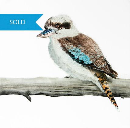 SOLD - Kevin The Kookaburra