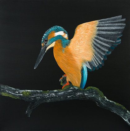 Kingfisher- (76.2 x 76.2cm) Original Arylic Painting on Canvas ( Large)