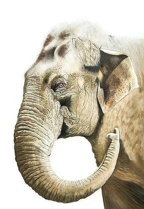 Good Morning Mr Elephant!