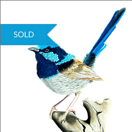 SOLD - Wren 5 - Original Pastel Drawing