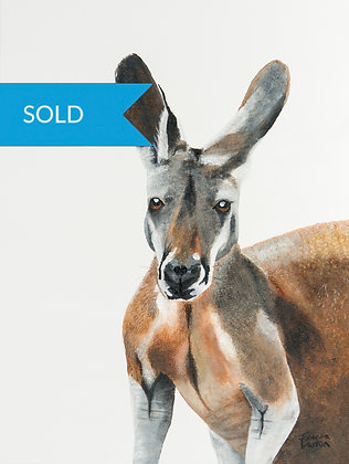 SOLD - Red Kangaroo- (40 x 30cm) Original Arylic Painting