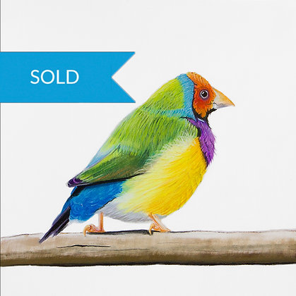 SOLD - Finch 1