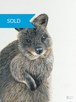 SOLD - Quokka- (40 x 30cm) Original Arylic Painting