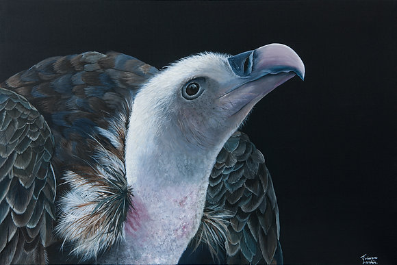 Vulture- (76.2 x 50.8cm) Original Arylic Painting