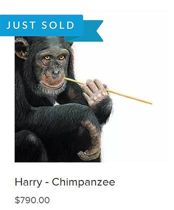 SOLD - Harry - Chimpanzee