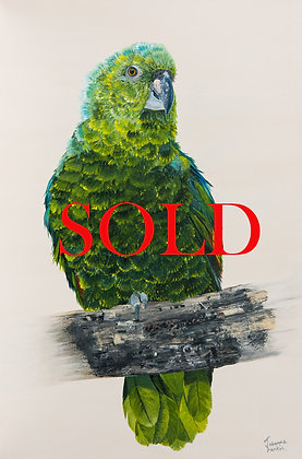 Young Green Parrot- (76.2 x 50.8cm) Original Arylic Painting