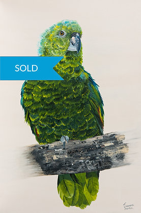 SOLD - Young Green Parrot- Original Arylic Painting