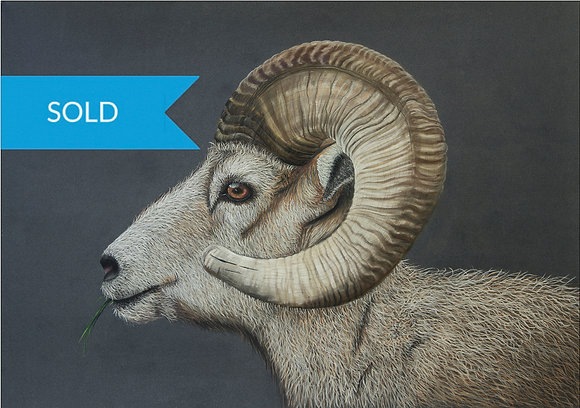 SOLD -The Ram