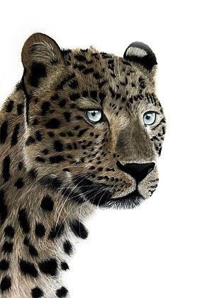 Once a Cheetah, always a Cheetah
