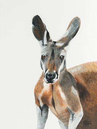 Red Kangaroo- (40 x 30cm) Original Arylic Painting