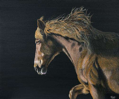 Freedom- Wild Stallion