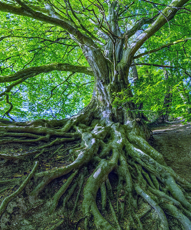 green-tree-photo-1080401_edited.jpg