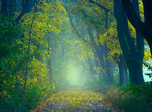 Tree Forest Autumn  -wallpapers.io-1280x