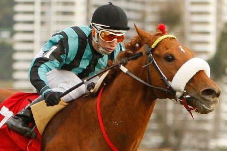 Wingman, un caballo inolvidable