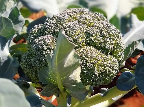 Brócolis japonês orgânico (unidade)