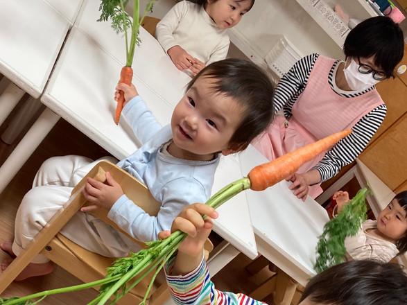野菜の観察