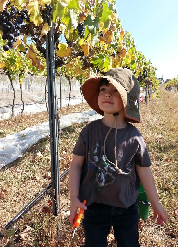 Harvest helper
