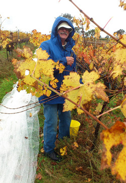Dave in the autumn vines