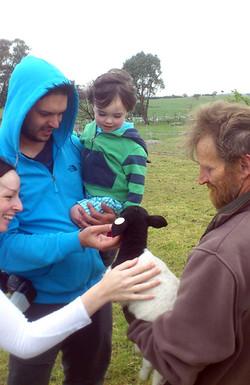 Feeding the baby dorpers
