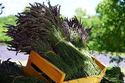 aroma-lavender-bnr.jpg