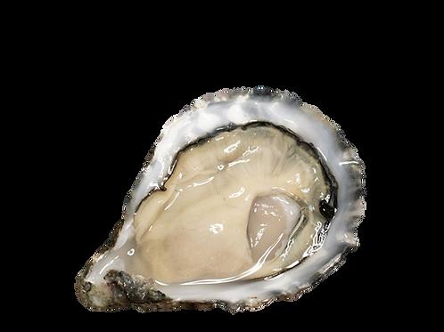 Mor Irish Oysters Nr. 2 (80-120g)