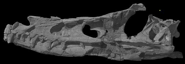 04 Velociraptor_mongoliensis 2.jpg