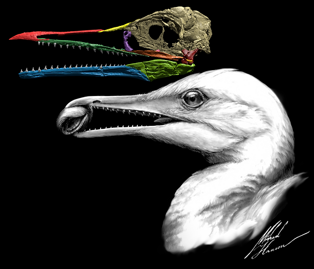 01 ichthyornis painting and skull colored.png