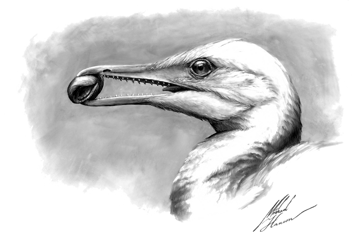 ichthyornis painting trans bg 02.png