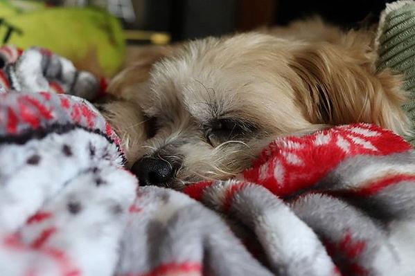 Peanut looking cute as always #dog #dogs