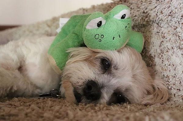 #dog #dogs #dogs_of_instagram #dogsofins