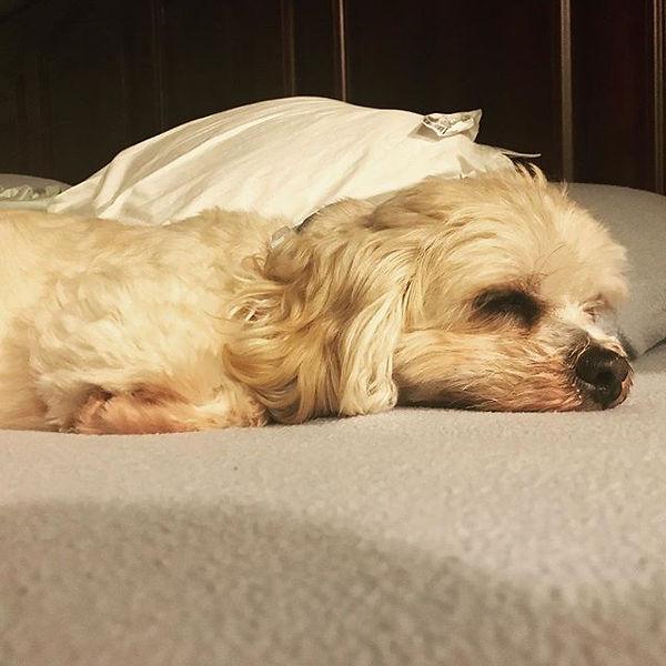 Peanut just feeling slumped from a long