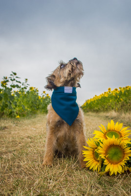 BDP_Collared_Sunflowers (4 of 13).jpg