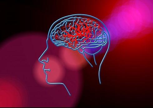 brain-0409-e1599222168325.jpg