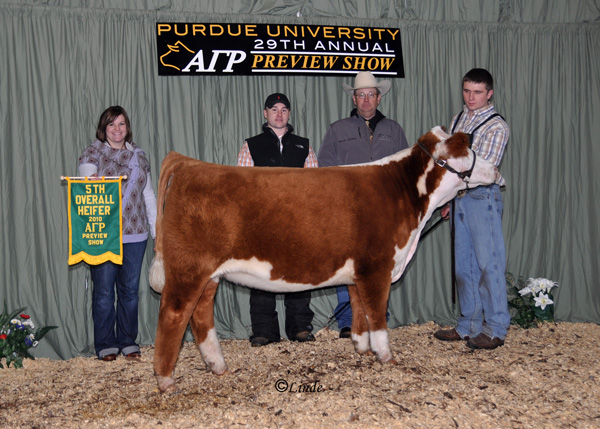 5th Heifer, Ch Hereford H lres