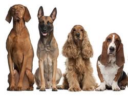 alle honden op rij