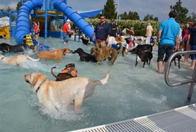 Mark your calendars….Sept 9…This exciting Parker Recreation event welcomes hundreds of dogs with the