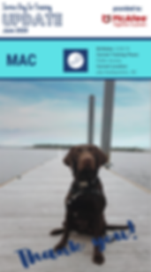 Mac_dog_2020.png