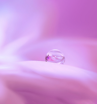 blossom-3054803_500x500px.png