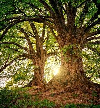 Bild von My pictures - tree-3822149_640