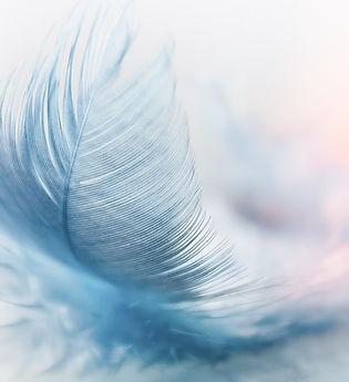 feather-3010848_2051x1465px.jpg