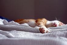 Kat van de slaap