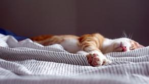 """Insomnie, """"Comme on fait son lit, on se couche"""""""