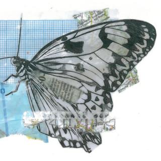 Wax Butterfly