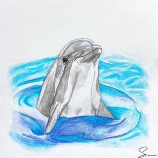 Dolphin Watercolour
