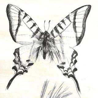 Butterfly - Full Body